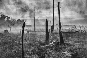 Charlie Hamilton James ©PHOTOGRAPHERS AGAINST WILDLIFE CRIME (TM)