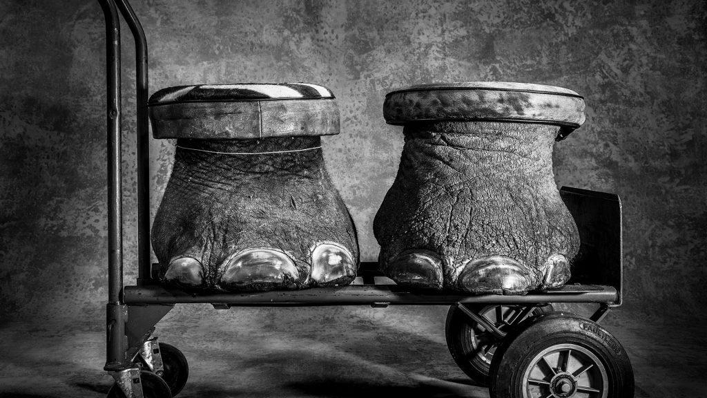 Britta Jaschinski ©PHOTOGRAPHERS AGAINST WILDLIFE CRIME (TM)