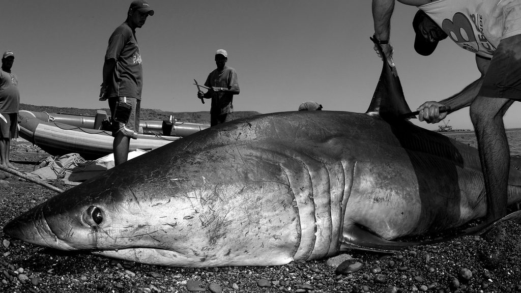 Brian Skerry ©PHOTOGRAPHERS AGAINST WILDLIFE CRIME (TM)